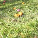 Eierkibbeln
