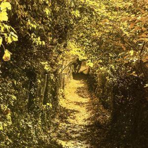 Herbstspaziergang im Wetzlarer Wald. #Herbst #farben