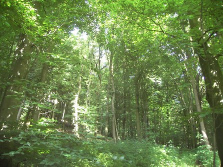2008-07-05-wiehengebirge-006