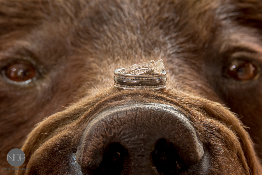 Hidden Valley Wedding Photos-40-Blog_© NDP 2015