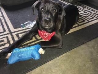 dog and his bone