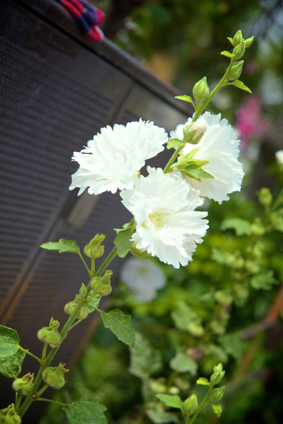 039_Kamakura_06152013