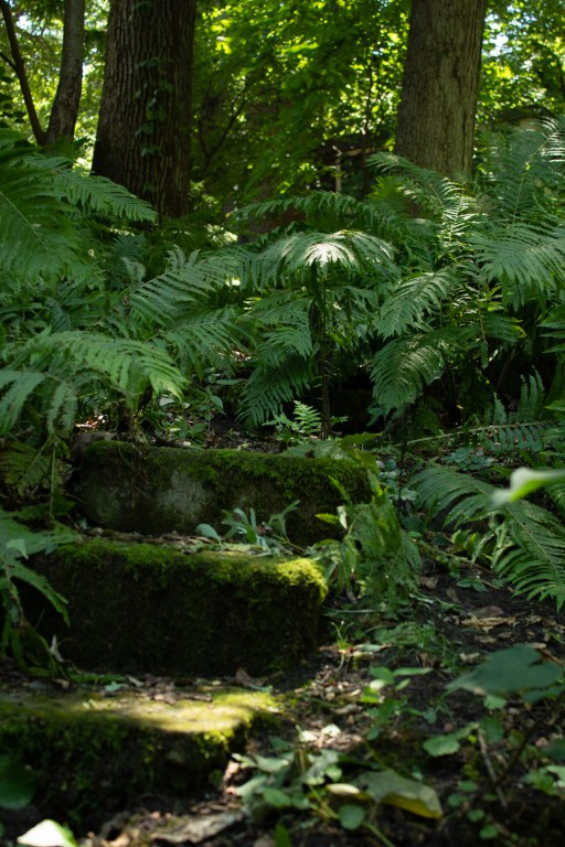 photo of some moss covered stone steps in a forest