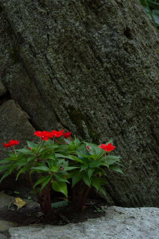 photo of some red flowers against a stone