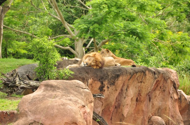 Wild Africa Trek 165