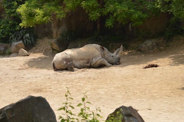 Maryland Zoo (44)