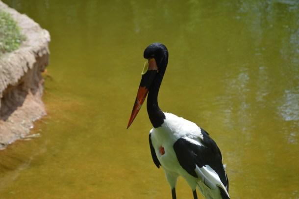 Maryland Zoo (48)