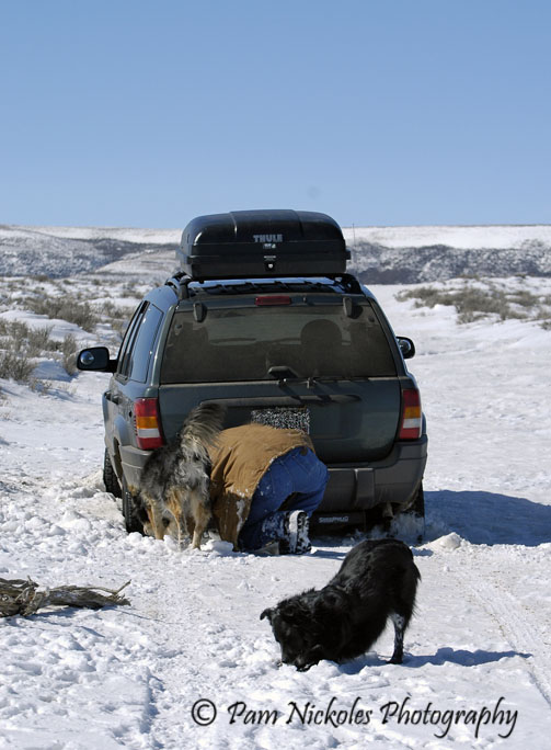 Our dog Brihten tries to help Tom while little Sage plays in the snow.