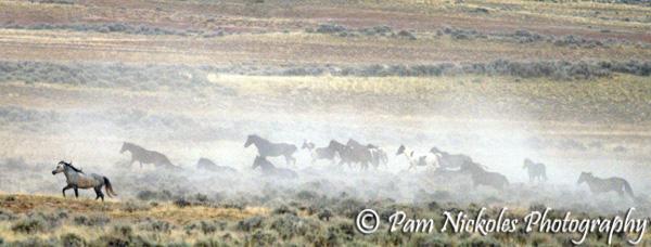 McCullough Peaks, WY wild horses