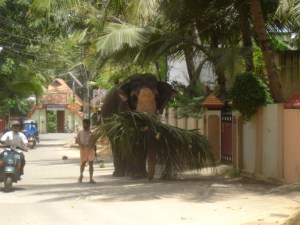 The street behind my house in Palkulangara