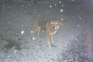 Our only dispute - that dog loves the cold and the snow.