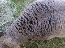 Look at the depth of this wool!