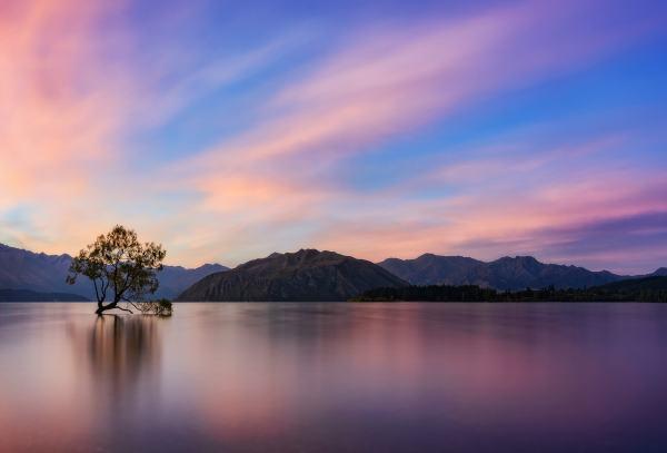 Sunset on the Wanaka tree New Zealand photo by Nico Babot