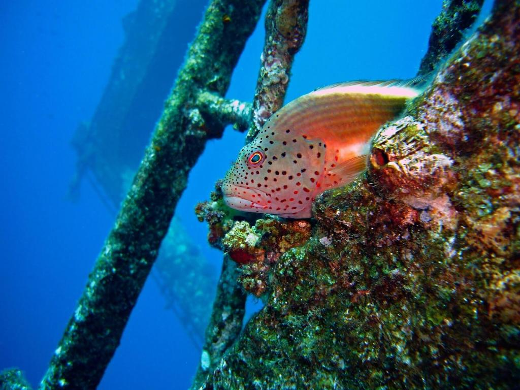 Wreck and thrills Diving package in Bali