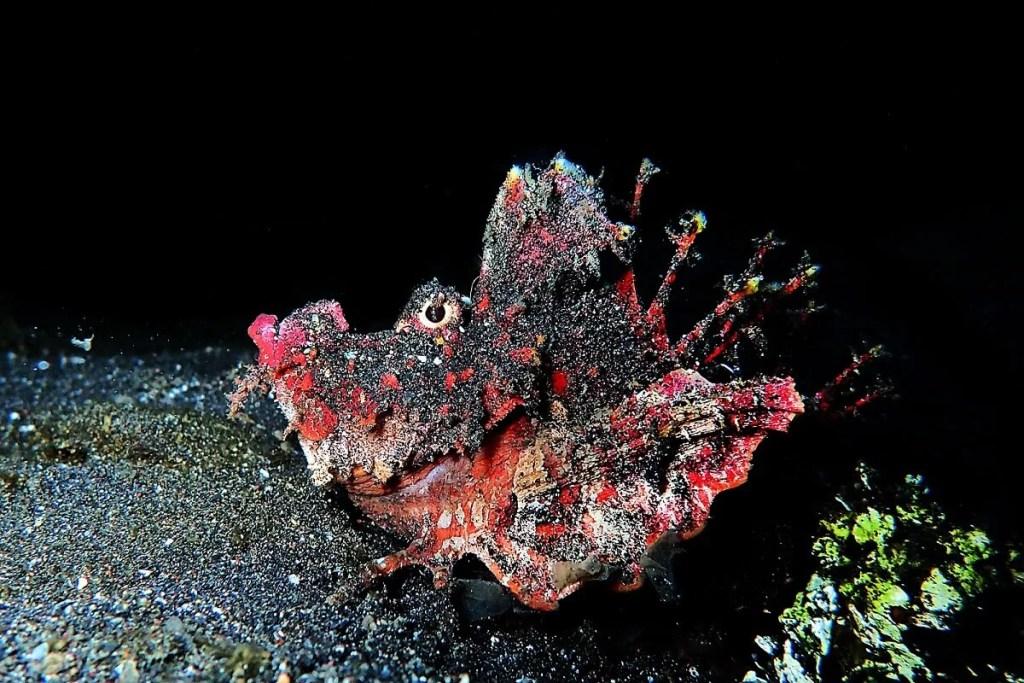 Suprising underwater marine life in Puri Jati dive spot, Indonesia