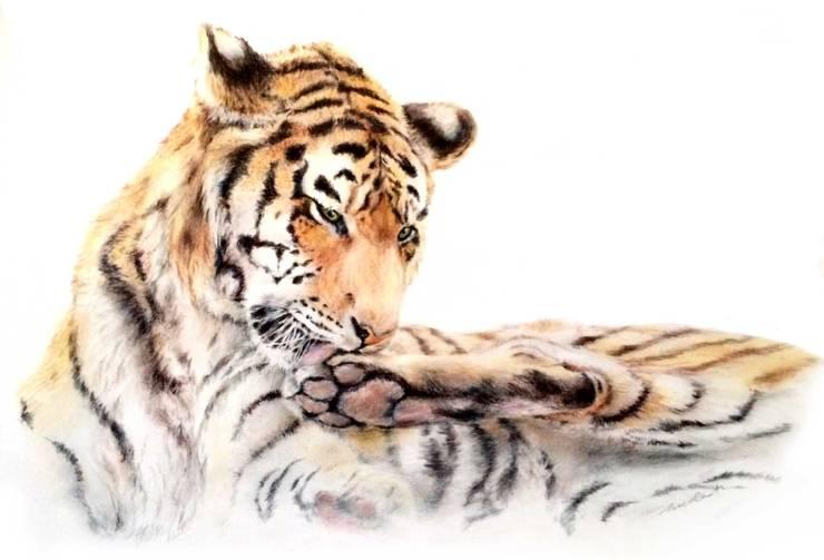 Tiger-WordPress2