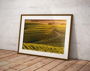 Vignoble d'Arbois