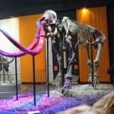mamut v muzeu