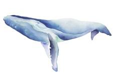 whale_01_web