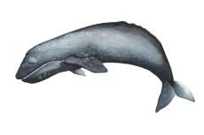 whale_05_web
