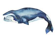 whale_12_web
