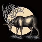 Strange Deer