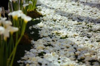 aisle flowers rizt carlton laguna niguel wedding ceremony