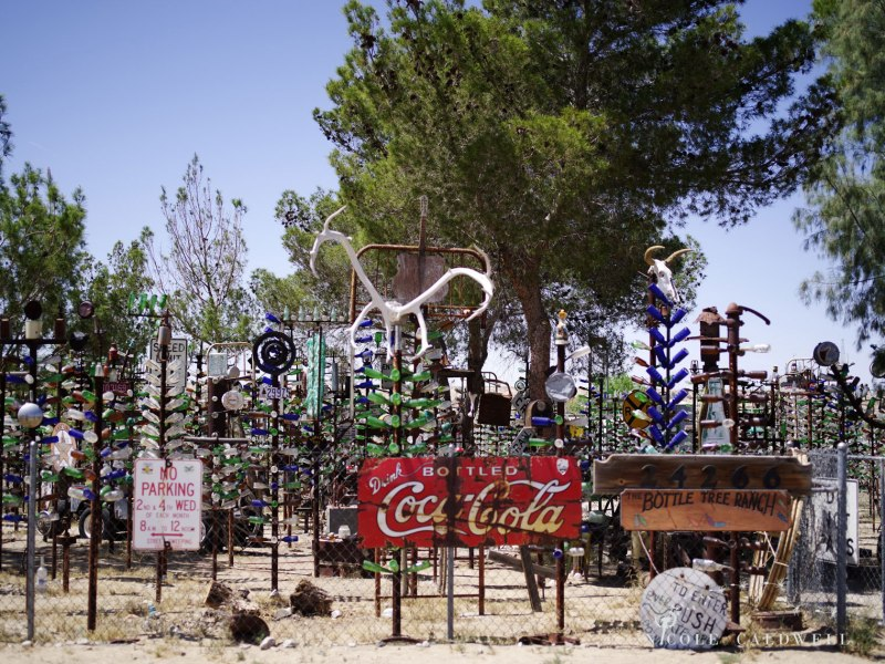 pentax-645z-at-Elmers-Bottle-Tree-Ranch-route-66-05