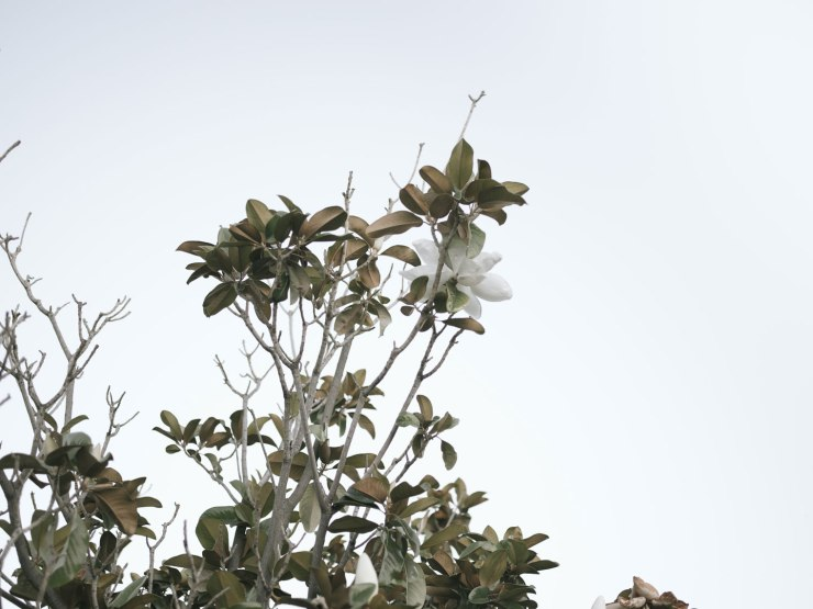 pentax-645z-magnolia_nicole-Caldwell_208