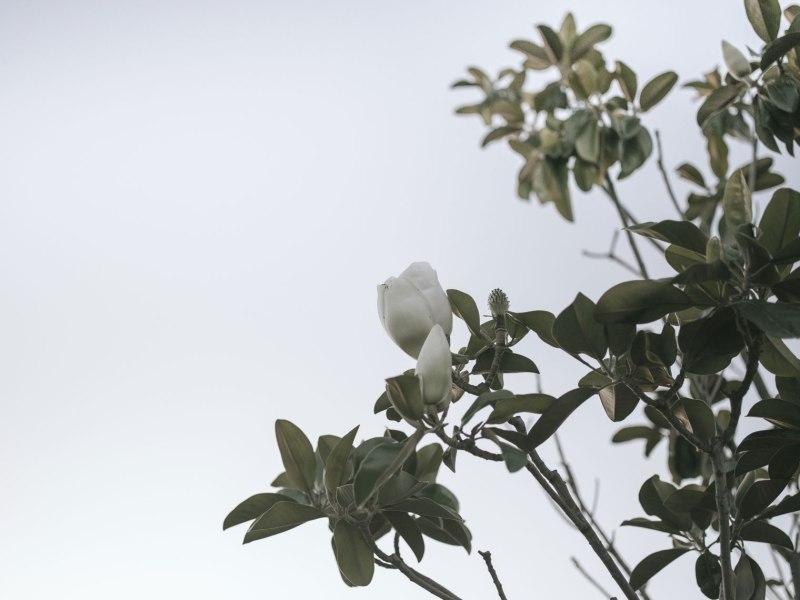pentax-645z-magnolia_nicole-Caldwell_214