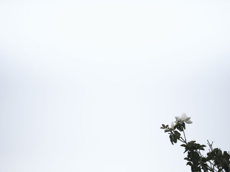 pentax-645z-magnolia_nicole-Caldwell_220