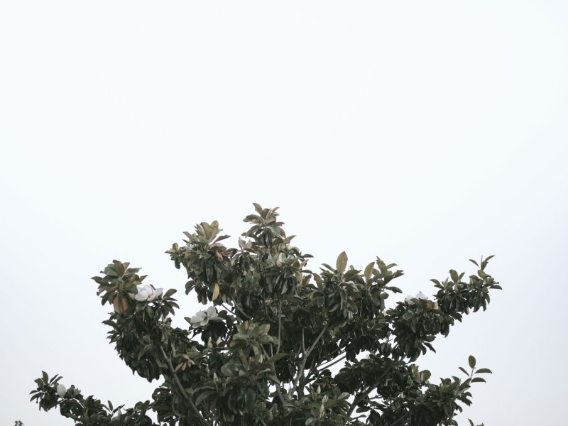 pentax-645z-magnolia_nicole-Caldwell_238