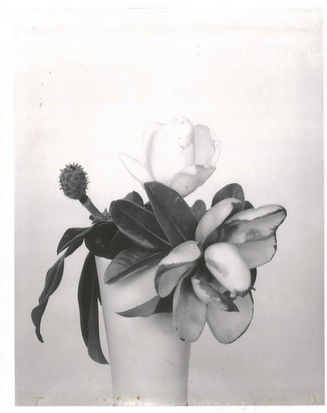 type 55 nicole caldwell polaroids magnolia 2
