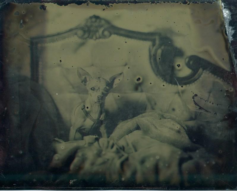 tintype-nicole-caldwell-studio-03