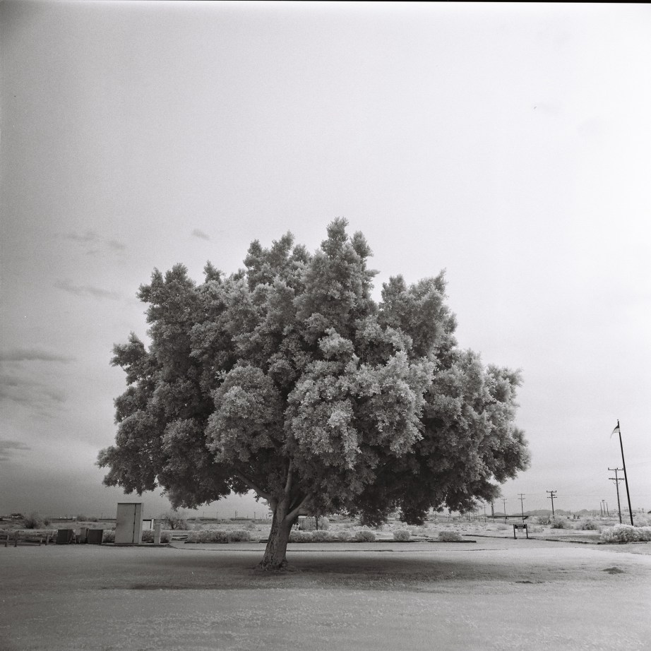 infrared_film_rollei_center_of_the_wrold_felicity_ca_nicole_caldwell07