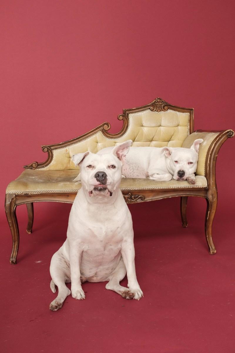 dog pet photographer nicole caldwell 03