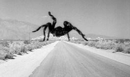 Tarantula_movie_h