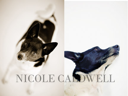 dog_portraits_by_nicole_cadlwell_leroy_02.jpg