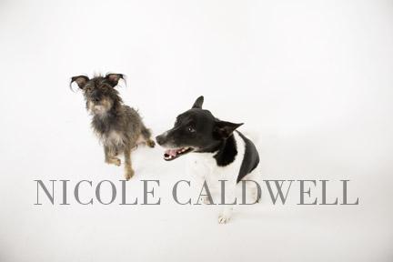 dog_portraits_by_nicole_cadlwell_leroy_03.jpg