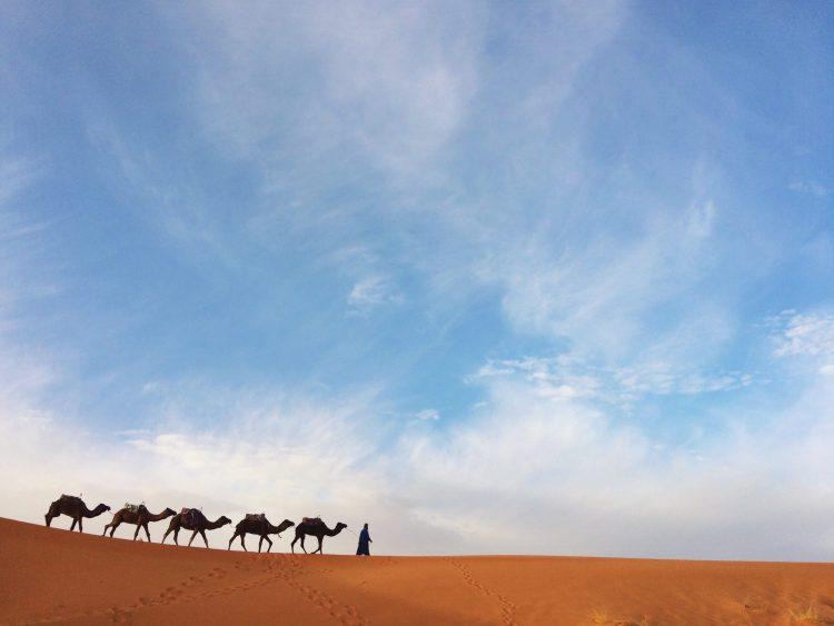 sahara desert morocco yoga retreat camels