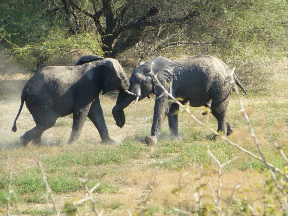 elephants-kruger-national-park
