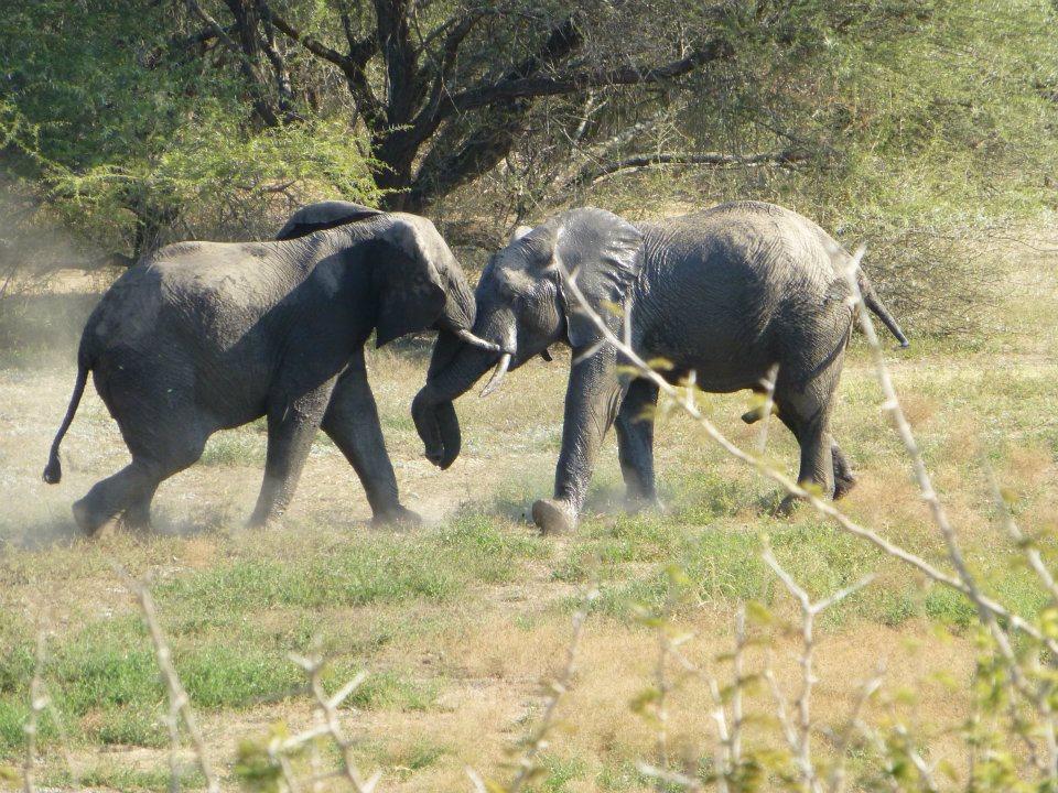 elephants-kruger-national-park