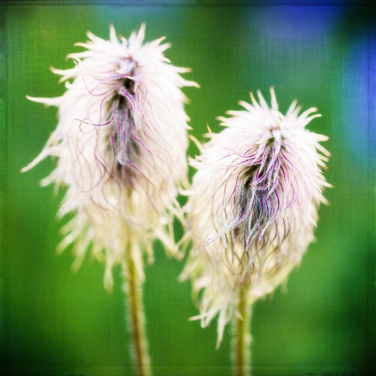 Limpiador de pipas / Fuzzy stick flores | Arte al arte