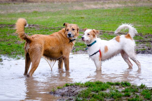 Watching my pups play in the mud.