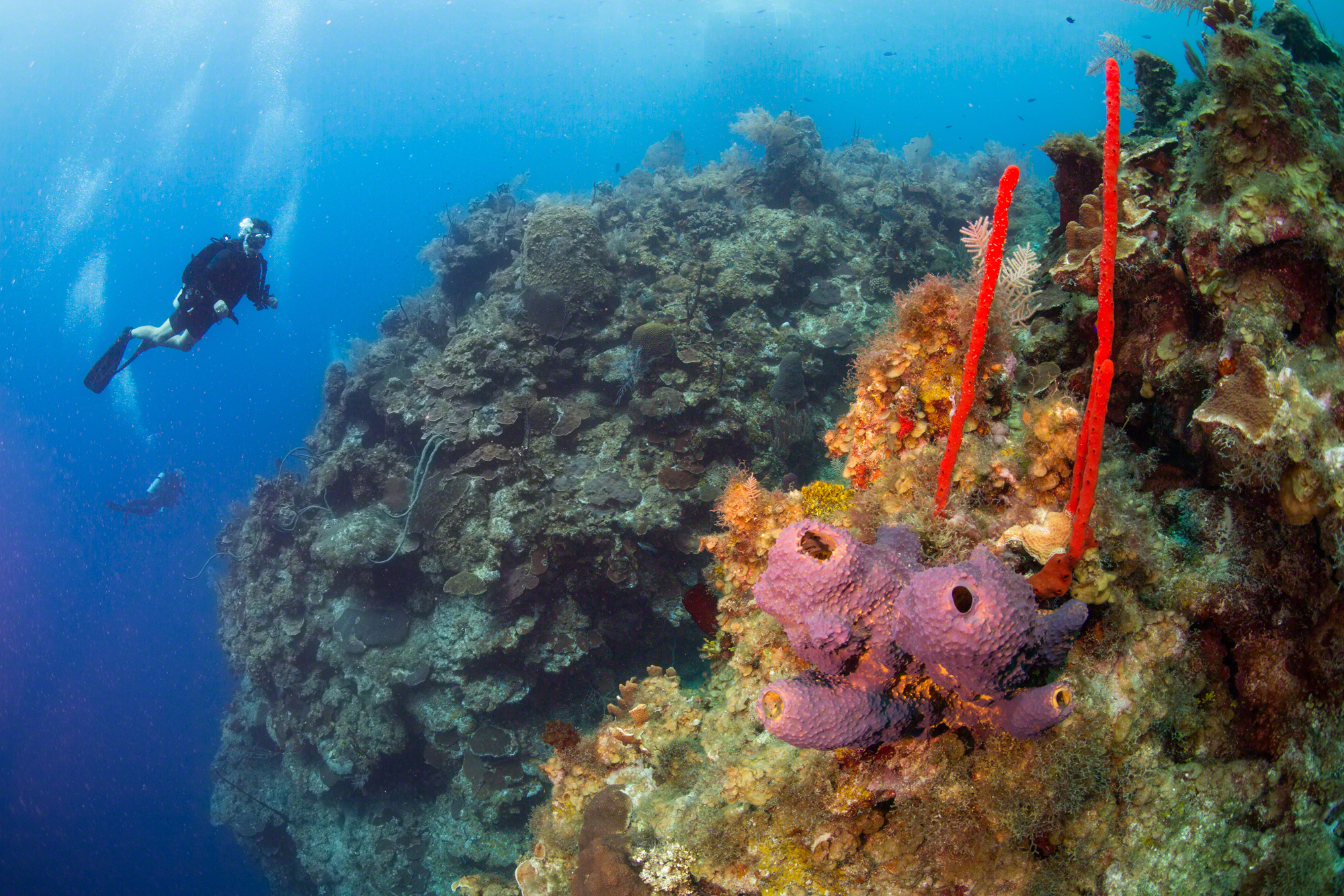 Cayman Island Diving