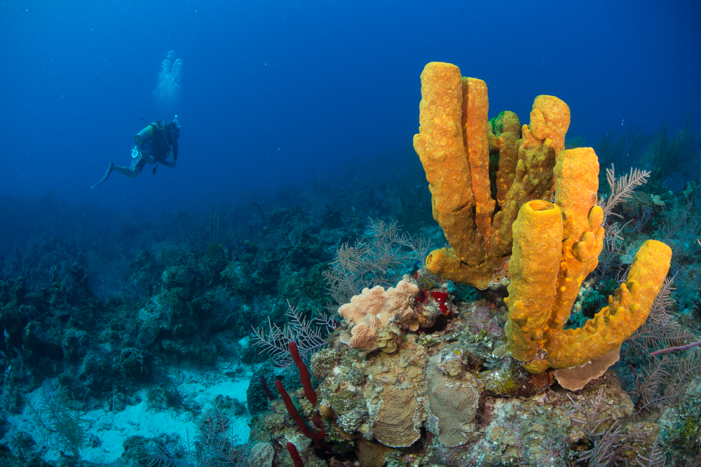 Cayman Islands Diver