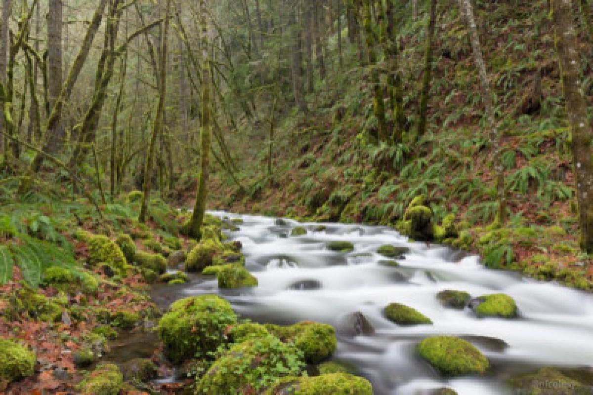 Gorton Creek in the Columbia River Gorge