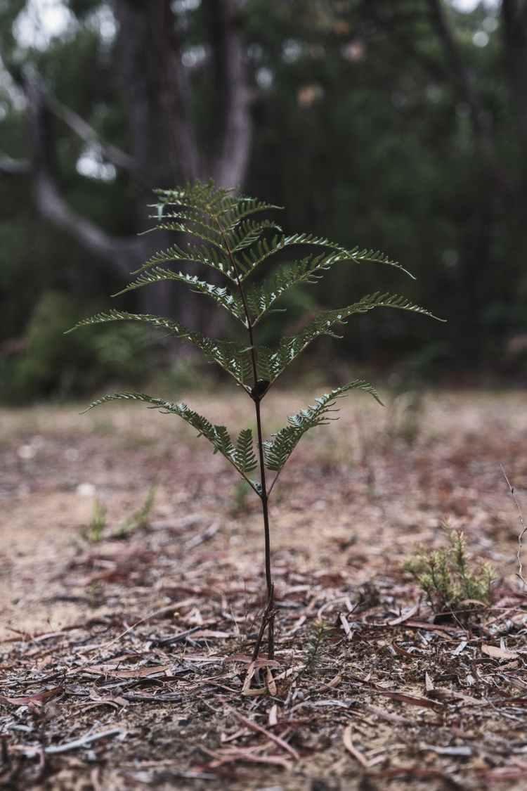 gentle fern leaf growing in green woods