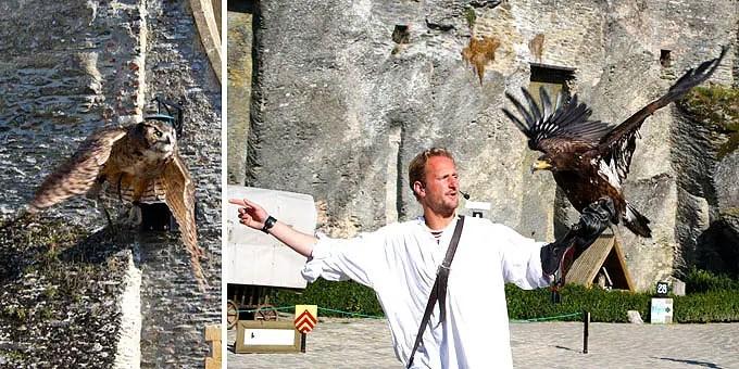 Falkner mit einem Greifvogel im Belgien Urlaub