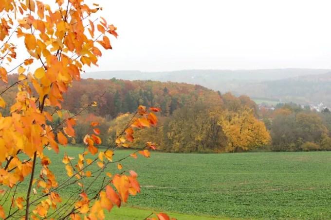 Sehenswuerdigkeiten-suedwestpfalz-dahner-felsenland-rheinland-pfalz-reisetipps-natur-oktoberlandschaft